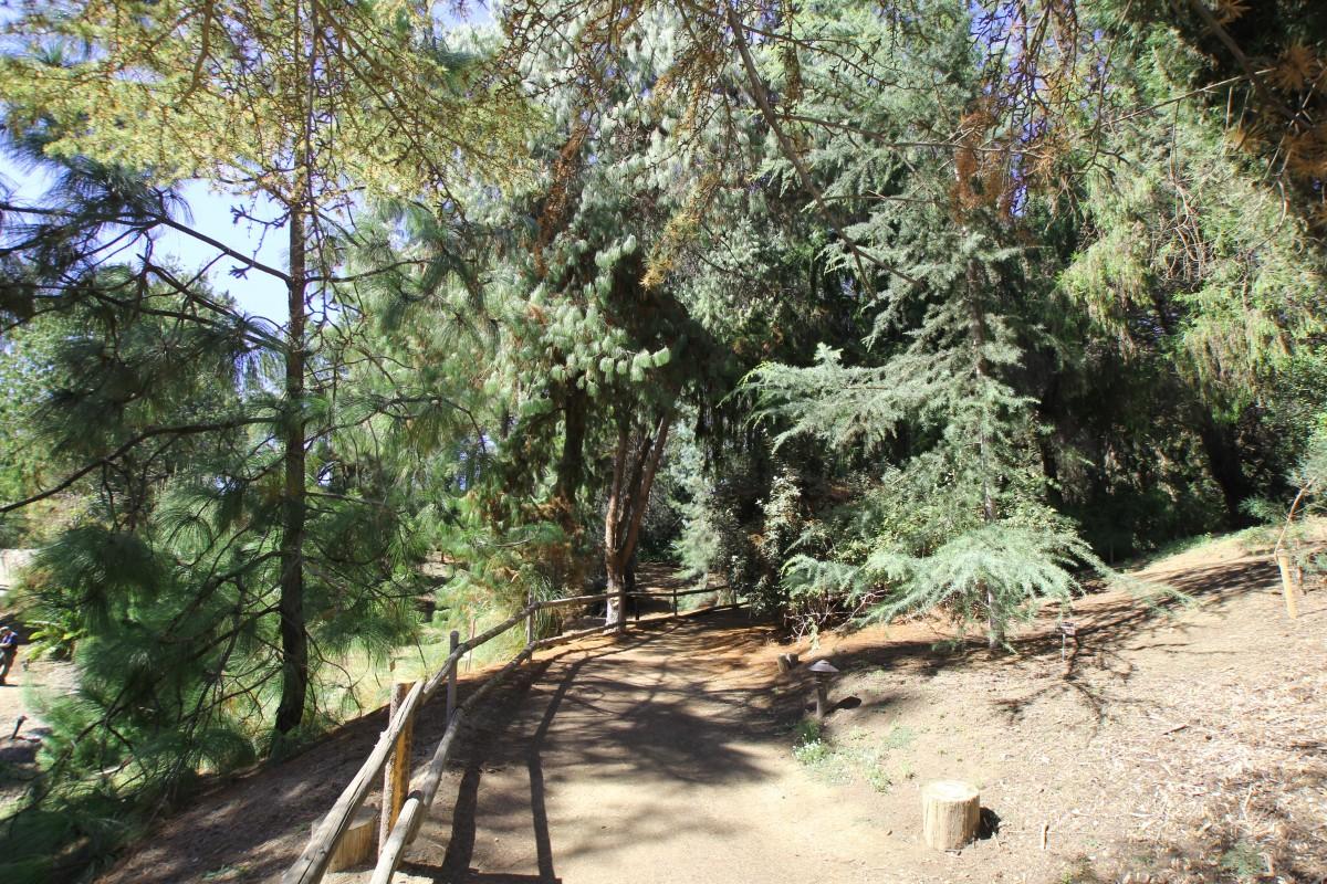 PinetreesatWildAnimalPark